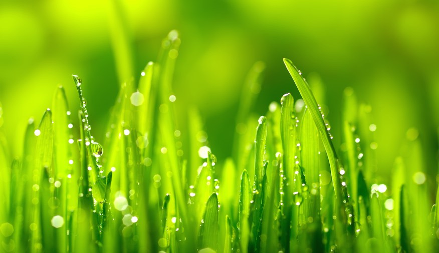 Water Your Lawn More Effectively